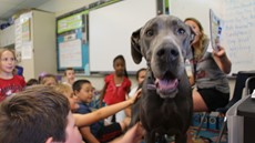 A Great Dane dog with small children around her