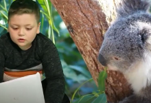 A young boy with a picture of a koala bear behind him